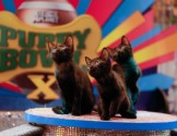 Puppy Bowl X Day One
